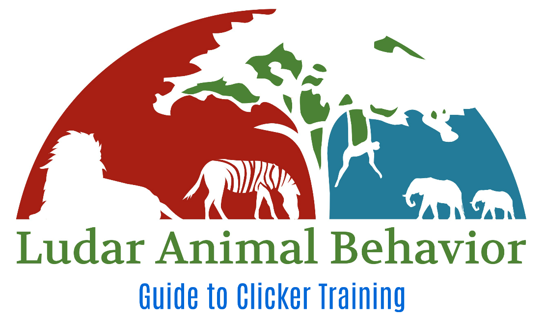 Guinea Pig Clicker Training Kit